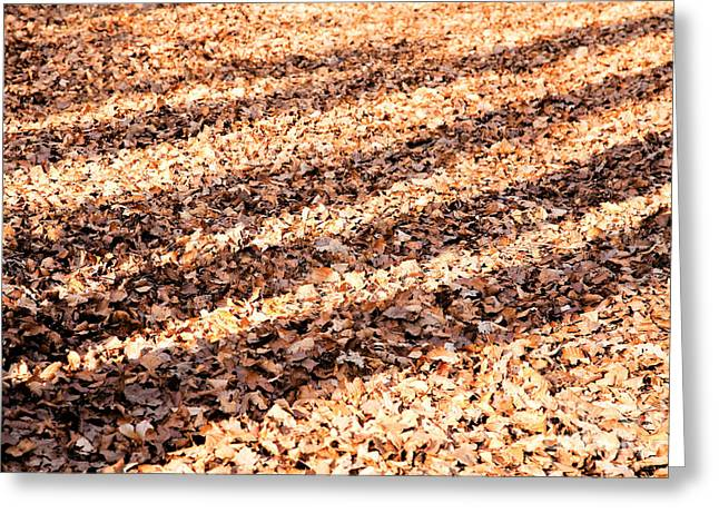 Shadows On The Leafy Forest Floor Greeting Card