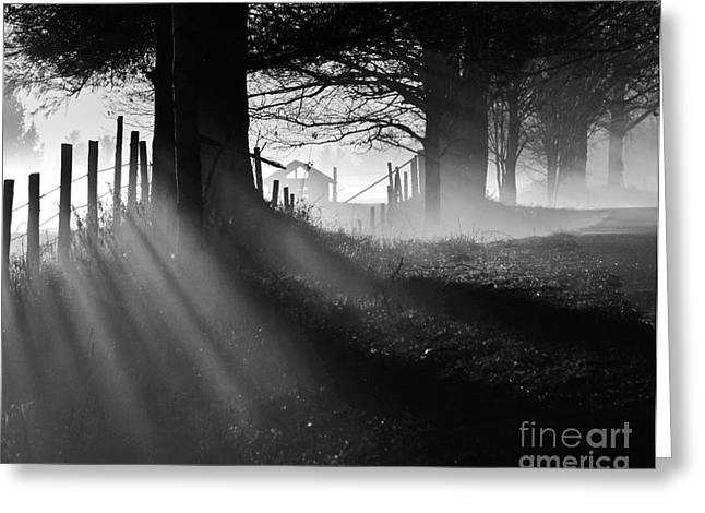 Shadows Greeting Card by Paul Noble