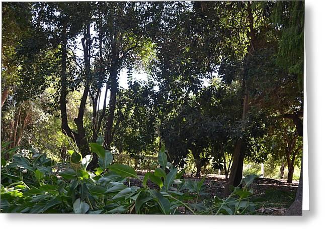 Shady Jungle Greeting Card by Kiros Berhane