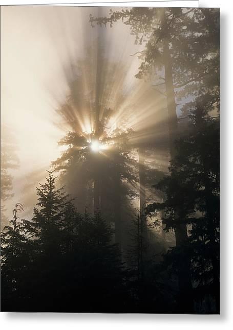 Shafts Of Sunlight Shine Greeting Card