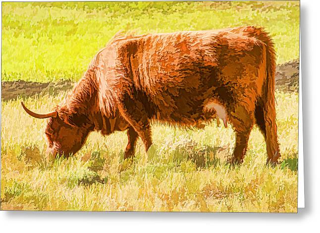 Shaggy Scottish Highlander Greeting Card