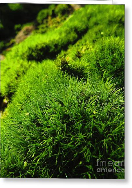 Shaggy Moss Greeting Card by Randy Jackson