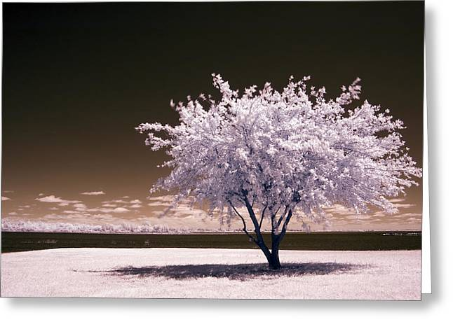 Greeting Card featuring the photograph Shaking The Tree by Mike Irwin