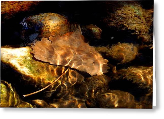 Shallow Beauty Greeting Card by Steven Milner