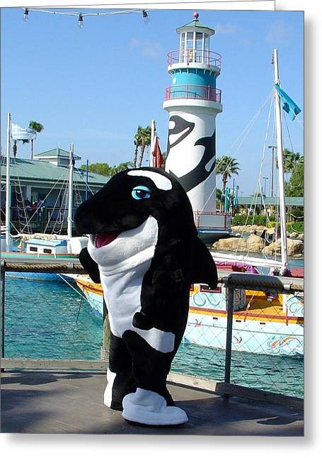 Shamu Greeting Card