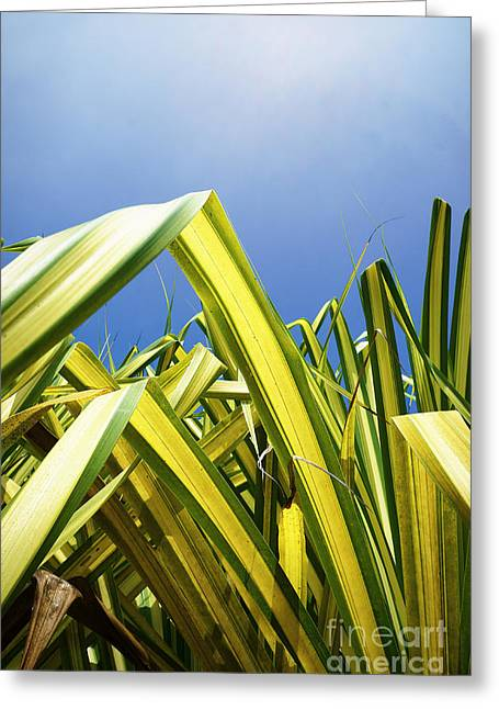 Greeting Card featuring the photograph Shape Of Hawaii 9 by Ellen Cotton