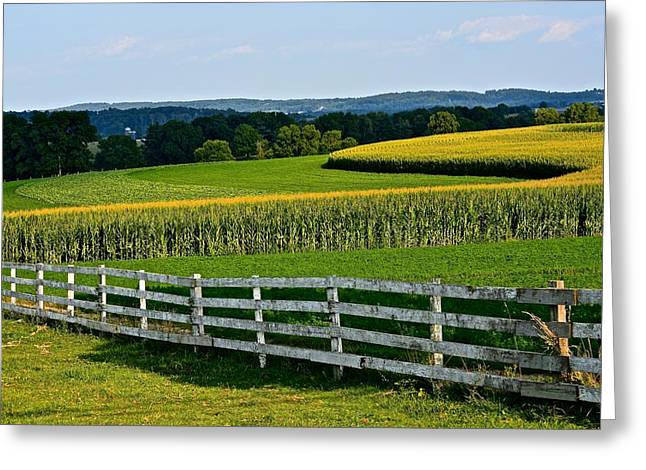 Shapely Cornfield 2 Greeting Card