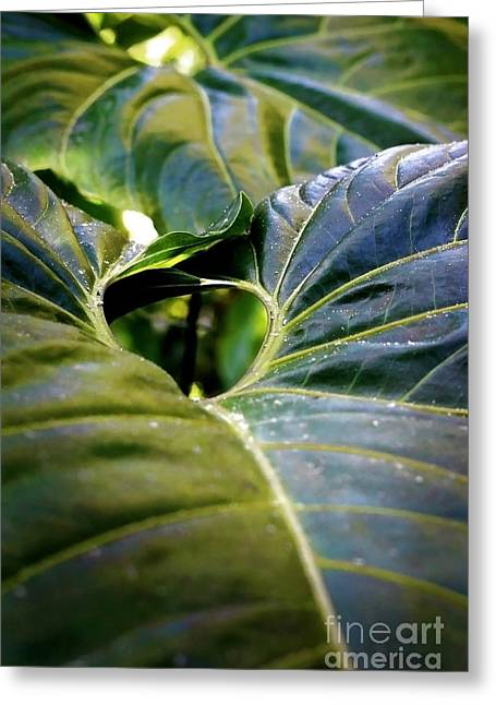 Greeting Card featuring the photograph Shapes Of Hawaii 11 by Ellen Cotton