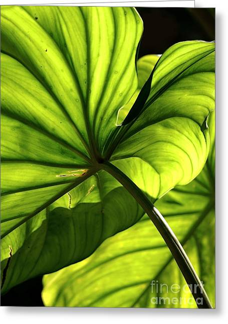 Shapes Of Hawaii 12 Greeting Card by Ellen Cotton
