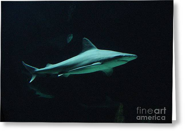 Shark-09451 Greeting Card by Gary Gingrich Galleries