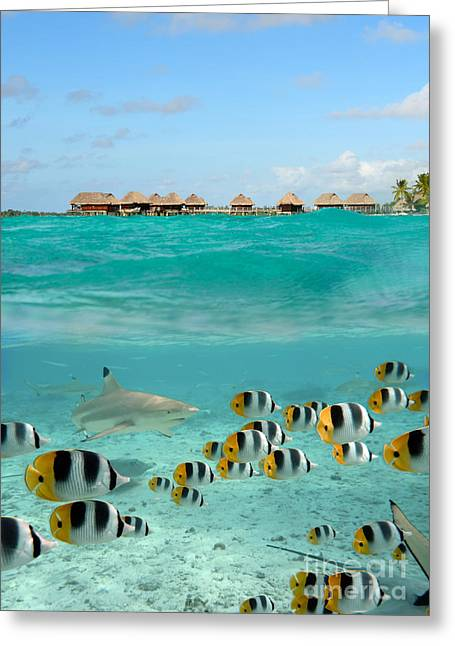 Over-under With Shark And Butterfly Fish At Bora Bora Greeting Card