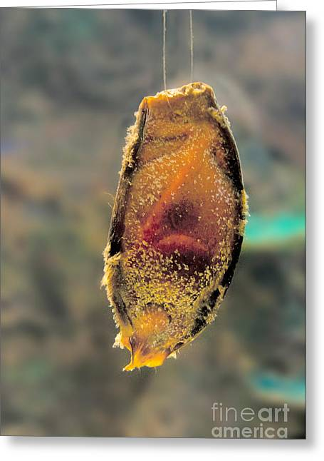 Shark Egg Greeting Card by Mark Newman