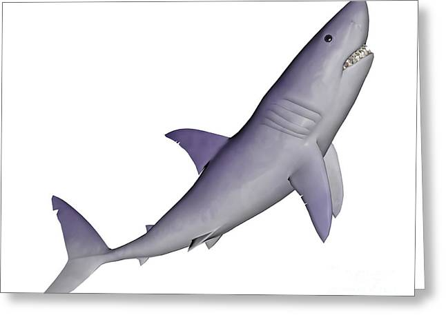 Shark Illustration, White Background Greeting Card by Elena Duvernay