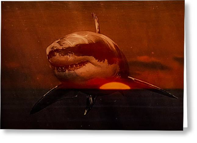 Shark In A Sunset Greeting Card