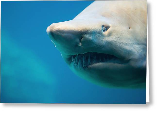Shark Greeting Card by Johan Swanepoel