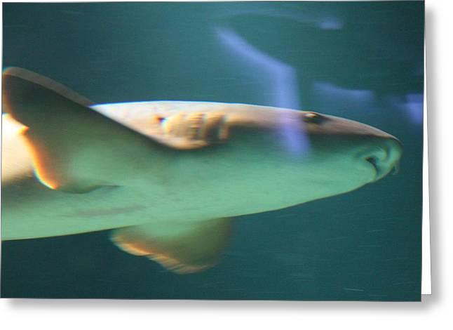 Shark - National Aquarium In Baltimore Md - 121224 Greeting Card