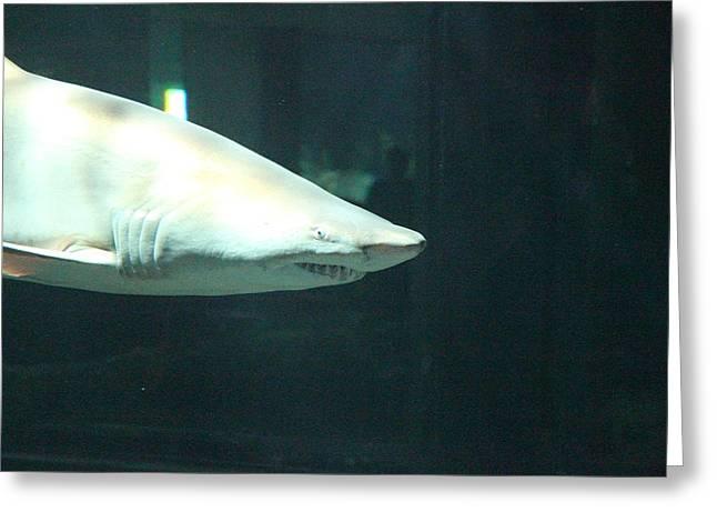 Shark - National Aquarium In Baltimore Md - 12125 Greeting Card