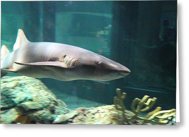 Shark - National Aquarium In Baltimore Md - 12129 Greeting Card by DC Photographer
