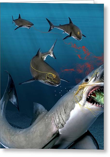 Shark Sensing Prey Greeting Card by Claus Lunau
