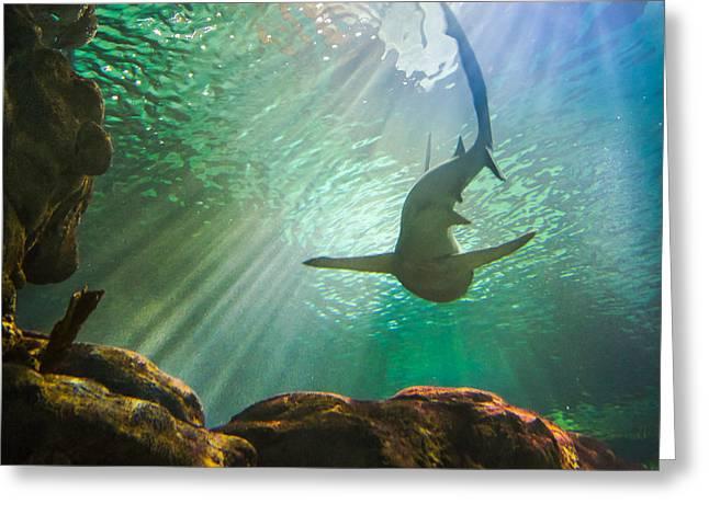 Shark Tank Greeting Card by Bill Pevlor