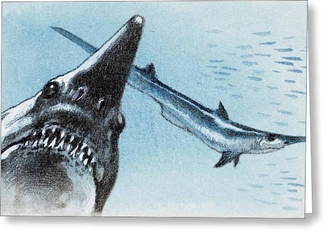 Shark Teeth From Fossil Greeting Card by Deagostini/uig
