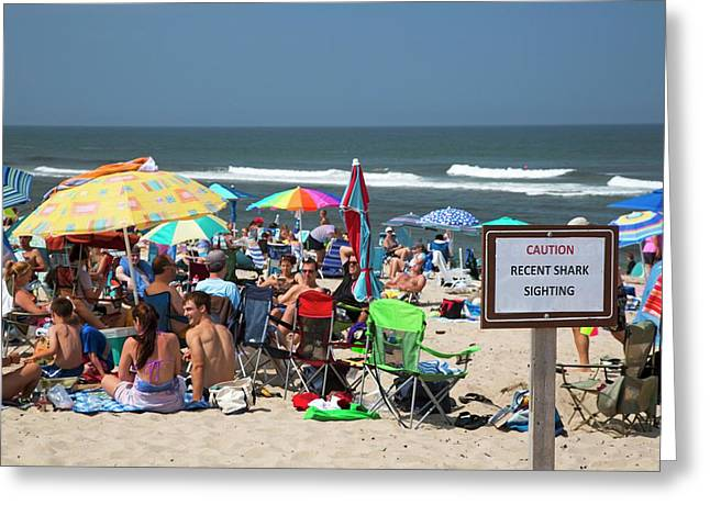 Shark Warning On A Beach Greeting Card by Jim West