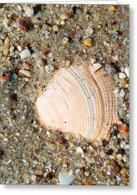 Greeting Card featuring the photograph She Sells Sea Shells by Dick Botkin
