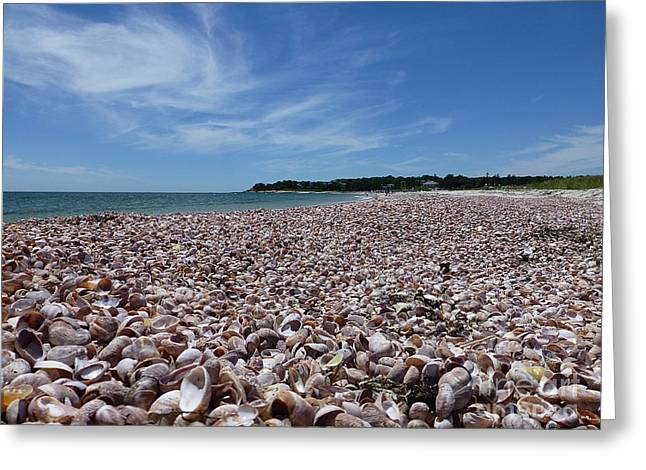 She Sells Sea Shells Greeting Card by Millie Reeve