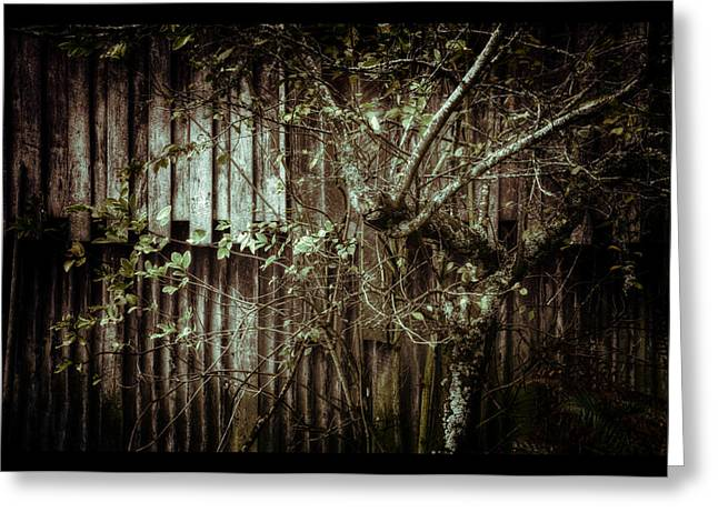 Shed Of Memories Greeting Card by Darryl Gibbs