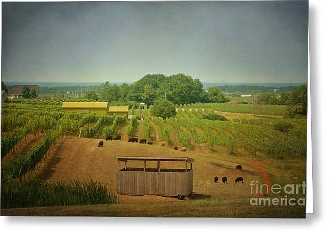 Greeting Card featuring the photograph Sheep Among The Vineyards by Maria Janicki