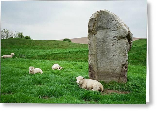 Sheep At Avebury Stones - Original Greeting Card