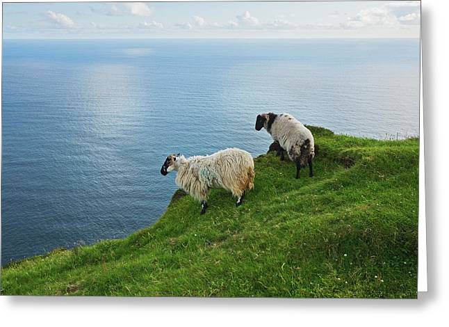 Sheep At Moyteoge Head Bei Dooagh Greeting Card by Carl Bruemmer