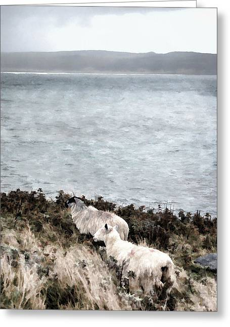 Sheep By The Seashore Greeting Card by Steve Hurt