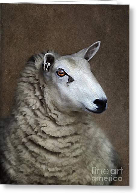 Sheep Greeting Card by Darren Fisher