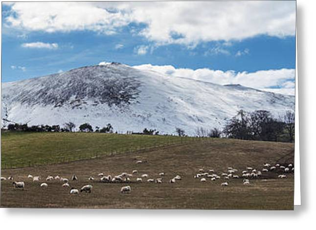 Sheep Grazing In A Field With Snow Greeting Card