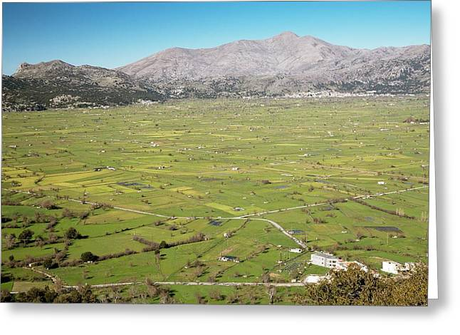 Sheep Grazing On The Lasithi Plateau Greeting Card