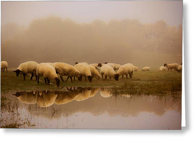 Sheep In The Fog Greeting Card by Ian Hufton
