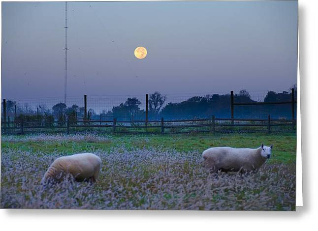 Sheep In The Moonlight Greeting Card by Bill Cannon
