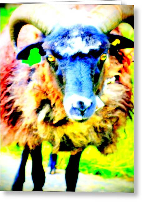 It's A Sheep Life Inside Of This Coat  Greeting Card by Hilde Widerberg