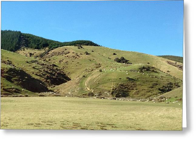 Sheep On Hill Greeting Card by Ron Torborg