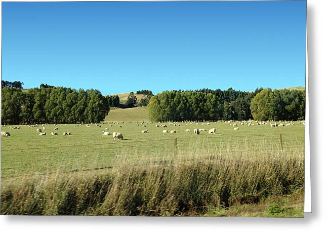 Sheep On Roadside Greeting Card by Ron Torborg
