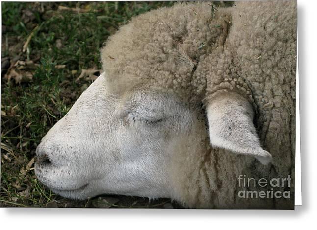 Sheep Sleep Greeting Card by Ann Horn