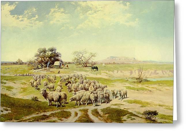 Sheepherding Montana Greeting Card by Olaf Seltzer