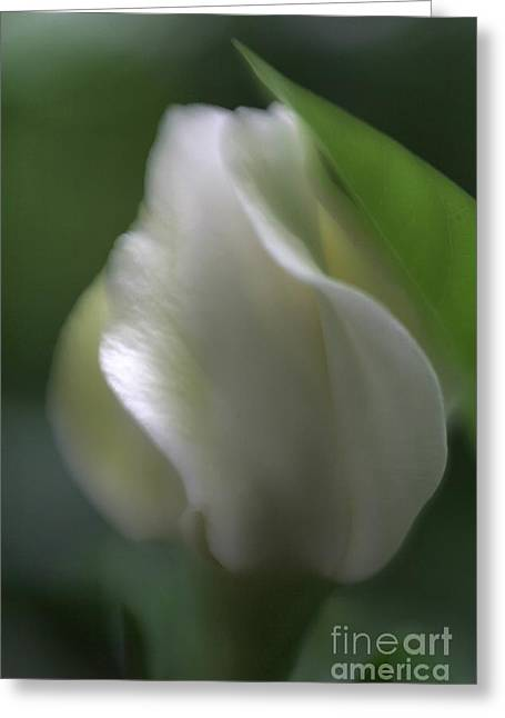 Greeting Card featuring the photograph Sheer Elegance by Mary Lou Chmura