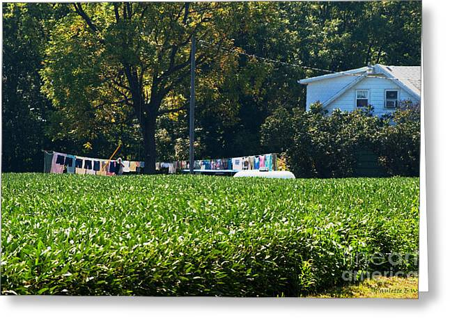 Sheets And Undies Greeting Card by Paulette B Wright