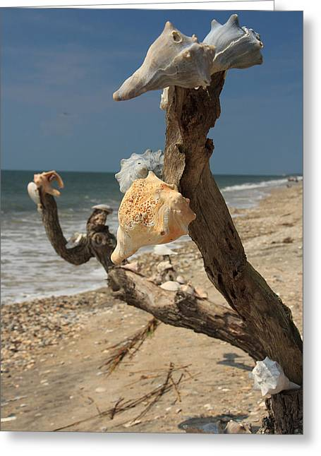 Shell Art Greeting Card