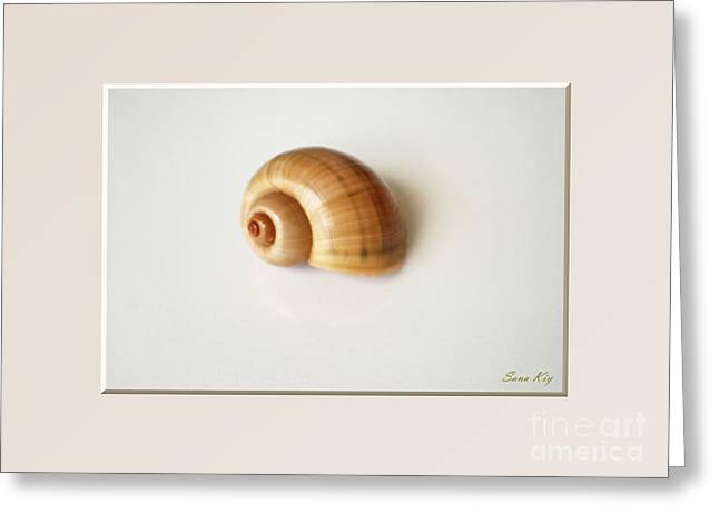 Shell. Delicate Colors Greeting Card