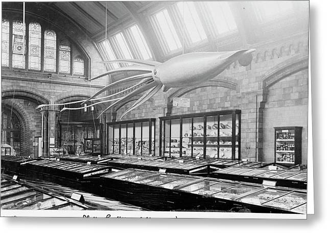 Shell Gallery Greeting Card by Natural History Museum, London/science Photo Library