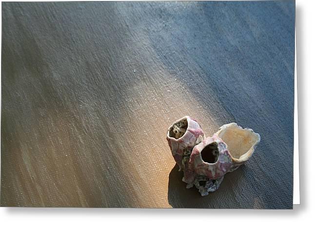 Shell House Greeting Card by Paulette Maffucci