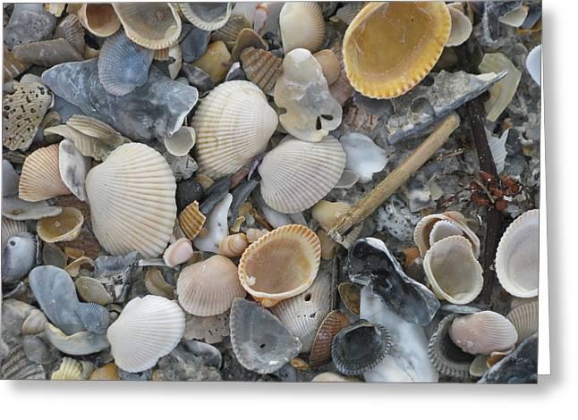 Shell Mosaic Greeting Card